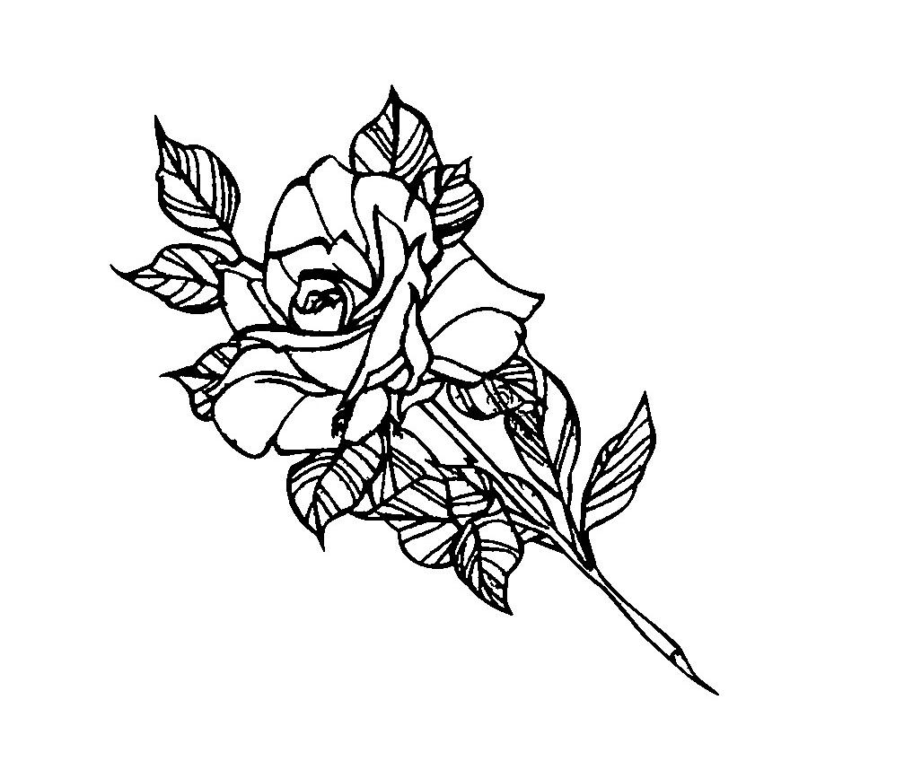 view 34 rosenbilder zum drucken und faerben