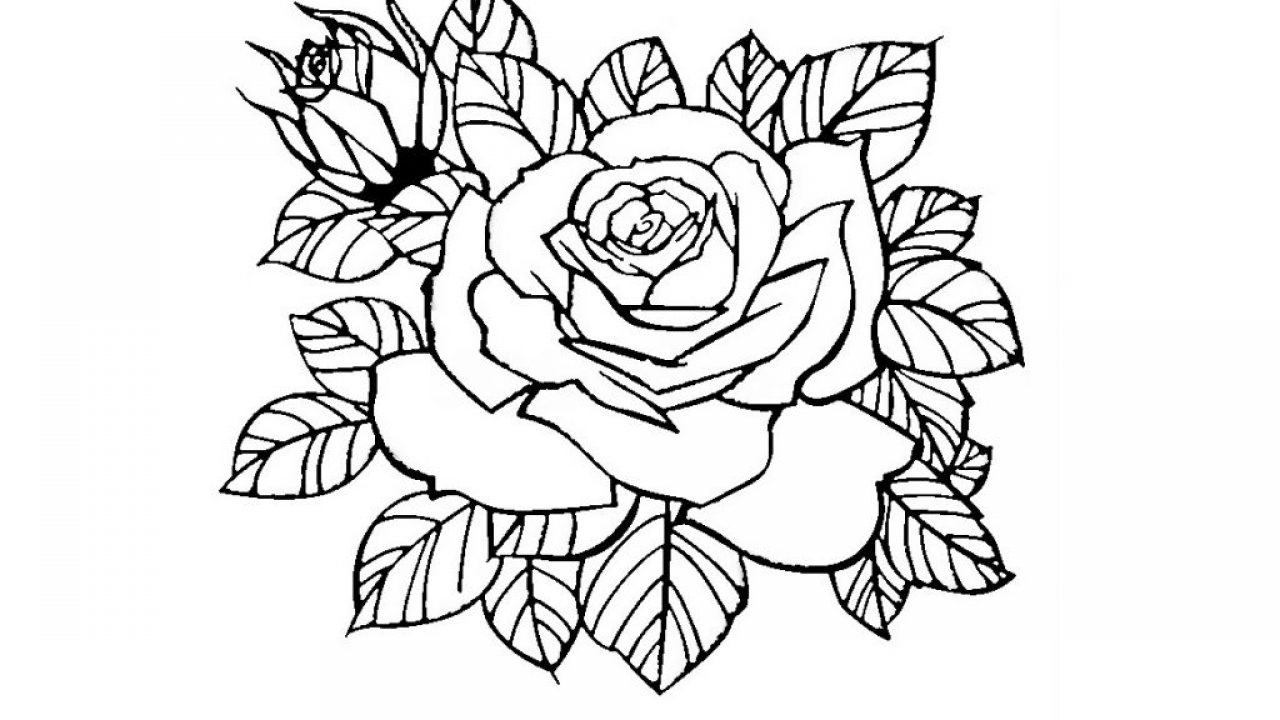 Ausmalbilder Rose Bilder Zum Ausdrucken Super Malvorlagen